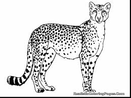 stunning realistic animal coloring pages with cheetah coloring