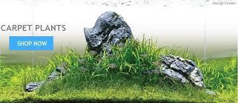 Aquascape Freshwater Aquarium Aquarium Plants From Aquarium Gardens Uk Live Aquatic Tropical