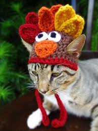 the thanksgiving turkey hat for cats and small dogs our daily ideas