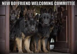 German Shepherd Memes - funny gsd memes page 4 german shepherd dog forums