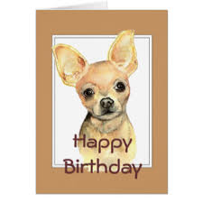 Memes De Chihuahua - de perros chihuahua