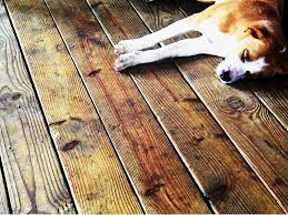 pet stains wood floor refinishing repairs staten island