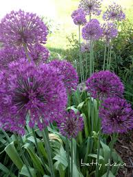 images about great outdoors on pinterest flower beds landscaping