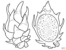 dragon fruit and its cross section coloring page free printable