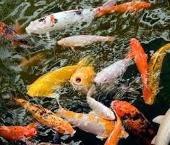 create an animal friendly backyard pond