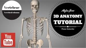 Human Anatomy Cervix Anatomy Of Vertebral Column 3d Tutorial Cervical Thoracic