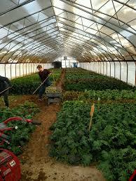 greenhouse for vegetable garden priapi gardens u2013 priapi gardens website