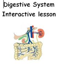 the 25 best human digestive system ideas on pinterest the human