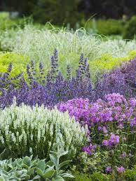 Plant Flower Garden - best 25 lambs ear ideas on pinterest foliage plants heuchera