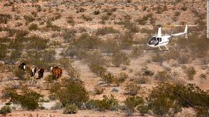 Us Department Of The Interior Bureau Of Land Management Showdown Nevada Rancher Feds Face Off Over Grazing Rights Cnn