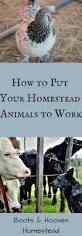 The Best Way To Put by 538 Best Helpful Hints For The Homestead Images On Pinterest