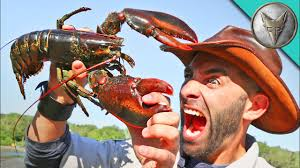 pinched by a lobster youtube