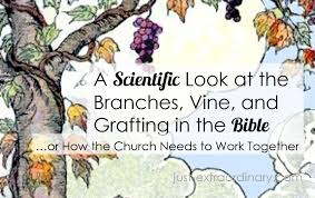 a scientific look at the branches vine and grafting in the bible