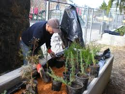 king county native plants building capillary beds for native plants the fascinating world