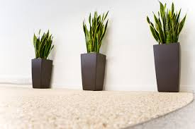 Modern Houseplants by Plant Gallery Office Plants Atlanta Alpha Plant Care Office