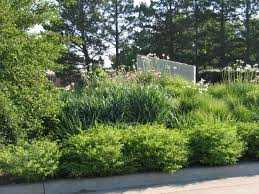 native plant solutions landscape design archives dyck arboretum