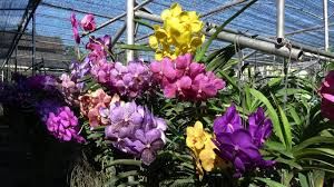 bai orchid and butterfly farm chiang mai