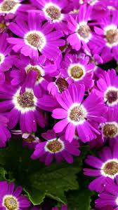 spring flowers iphone 6 plus wallpaper 14129 flowers iphone 6