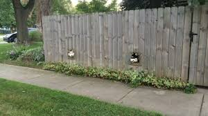 pet peek a fence window bubble for curious dogs