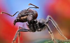 184 best ants mooratoogs images on pinterest ants animals and