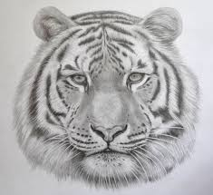 pencil drawing of animals art gallery pencil drawings of animals