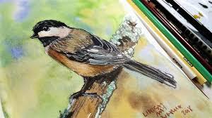 watercolor tutorial chickadee chickadee in ink watercolor colored pencil sketchbook sunday