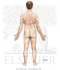 Picture Of Anatomical Position Anatomical Position