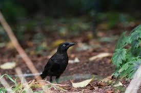 i used to birds new england backyard wildlife