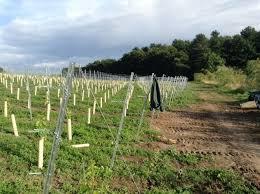 Trellis System Vsl Vineyard Solutions Ltd