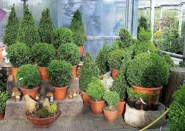 pflanzen f r balkon pflanzen fr balkon und garten unglaublich pflanzen im garten