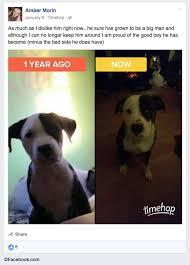 boxer dog kills man 2016 dog bite fatality pit bull that killed boy had a history of