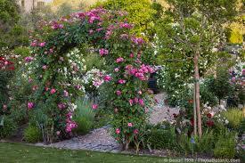 photos in the rose garden photobotanic