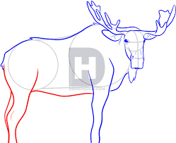 how to draw a moose step by step drawing guide by darkonator