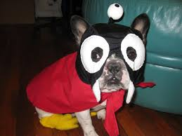 Futurama Halloween Costumes Bull Breed Futurama Halloween Costume Dogs Awesome