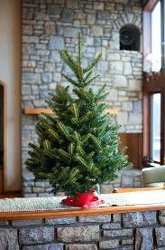 Christmas Tree Shopping Tips - live christmas tree live christmas tree buying tips im north