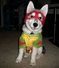 Funny Halloween Costumes Dogs 13 Awesome Halloween Costume Ideas Husky Dogs