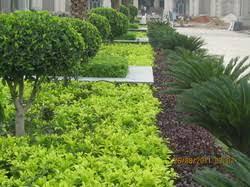 seasonal landscaping services in delhi seasonal landscape