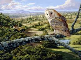 Wallpaper Barn Owl Hd Wallpapers Desktop Pictures U2013 One Hd Wallpaper Pictures