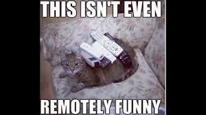 Cute Cat Memes - 10 funny cute cat memes youtube