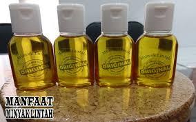 45 manfaat minyak dan khasiat minyak lintah untuk kesehatan