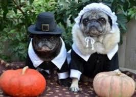 thanksgiving pet photos petvr