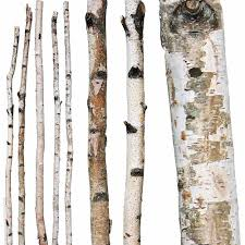 gorgeous decorative birch logs 41 decorative white birch logs uk