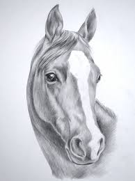 best 25 horse head drawing ideas on pinterest drawings of
