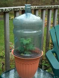 best 25 garden in a bottle ideas on pinterest vinegar weed