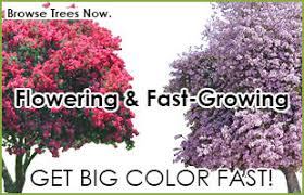 fast growing trees for sale buy fast growing trees
