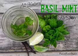 all natural basil mint herbal fly spray recipe for chickens