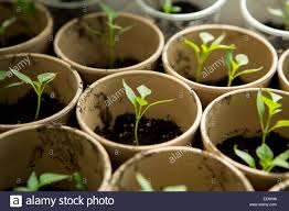 100 baby plants how to plant apple seeds in a pot youtube