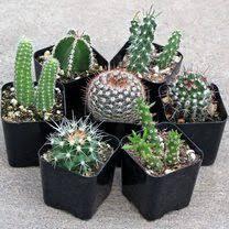 house u0026 indoor succulents mountain crest gardens