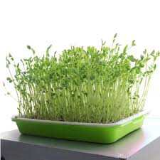 Vegetable Pot Garden by 2017 Nursery Pots Seed Starter Tray Seedling Tray Plant Vegetable