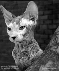 mr cartoon tattoo flash mister cartoon interview tattoo